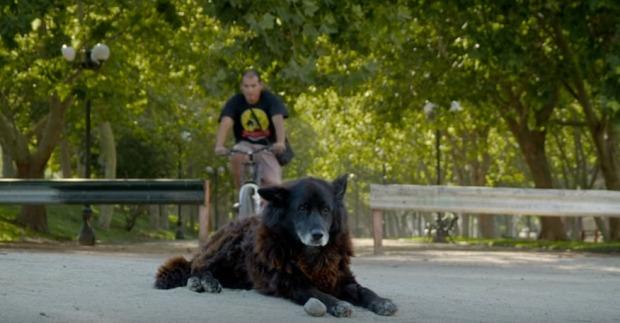 Por-qué-deberías-ver-el-nuevo-documental-sobre-perros-Los